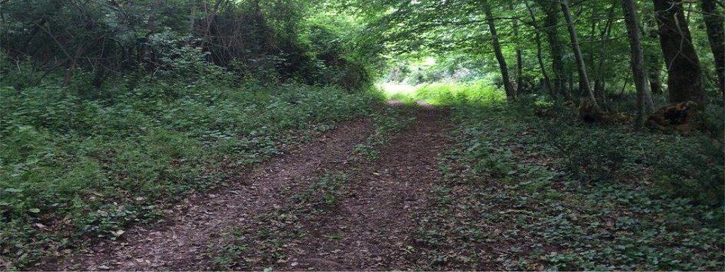 Pessel Retreat Centre tree-lined woodland tracks