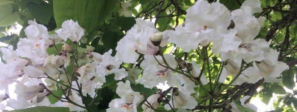 Pessel Creative Retreat Centre calm and peace acacia flowers