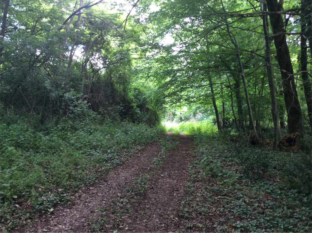 Domaine de Pessel retreats woodland tracks