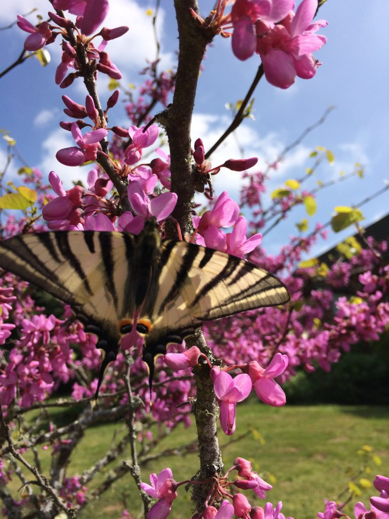 Domaine de Pessel retreats flowers and butterflies